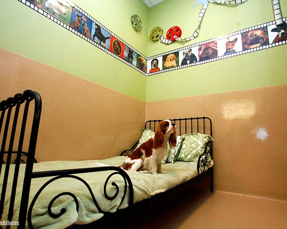 Отель The Barkley Pet Hotel & Day Spa