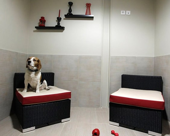 Отель Luxe Pet Hotels
