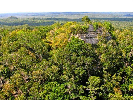 Заросший зеленью комплекс пирамид Ла-Данта