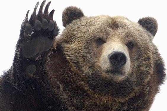 Очаровательный медведь